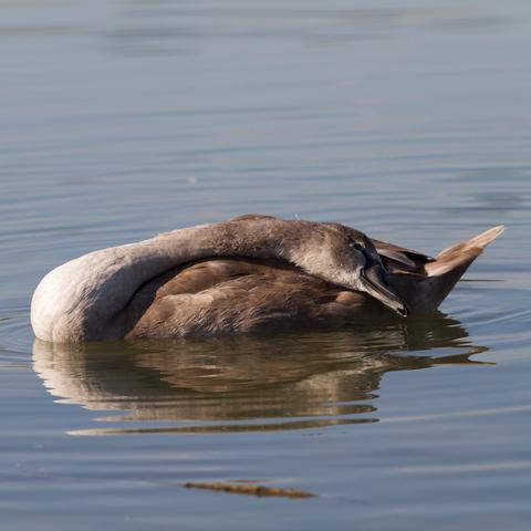 Wasserbewohner beim Teich Hainfeld