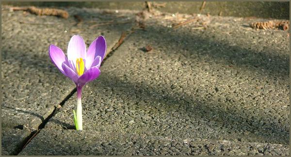 """Frühlings Erwachen"""