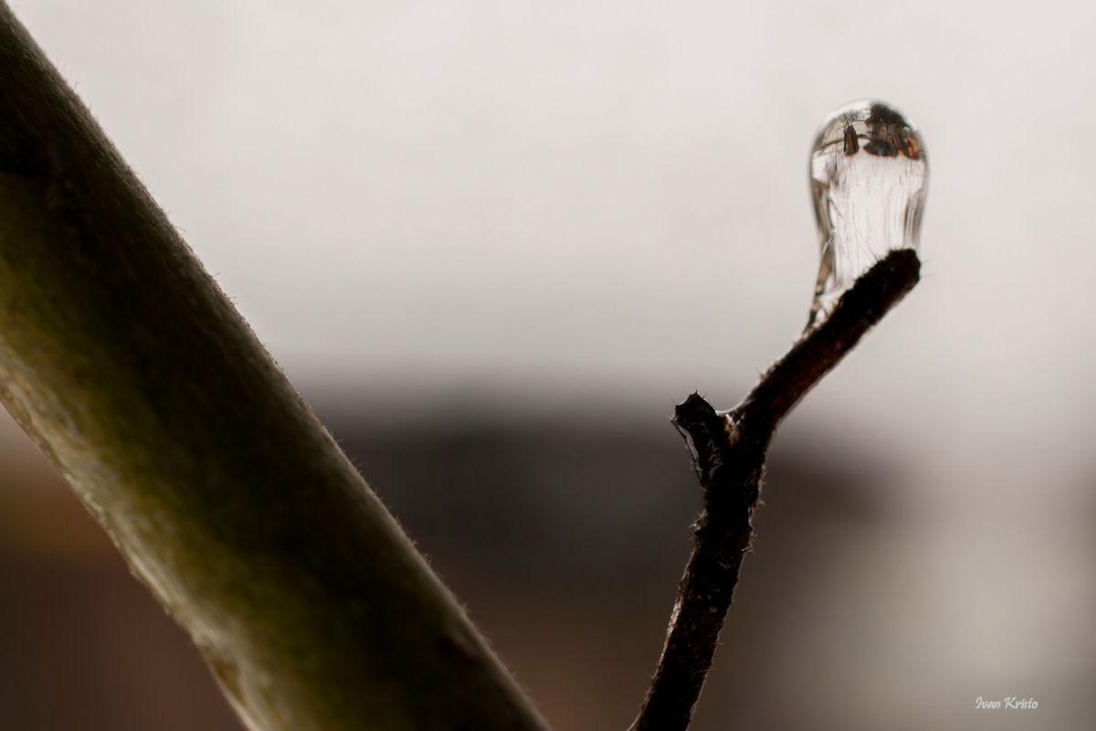 Miniwelt in Eis
