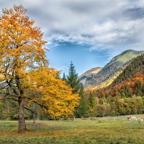 Herbstliches Karwendel
