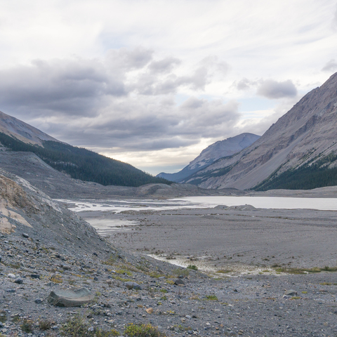 Colmbia Icefield 3