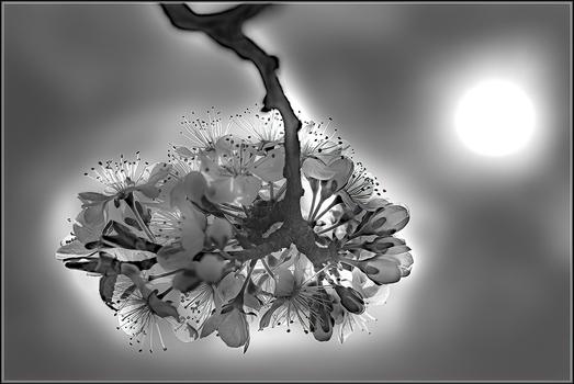 Baumblüten im Gegenlicht