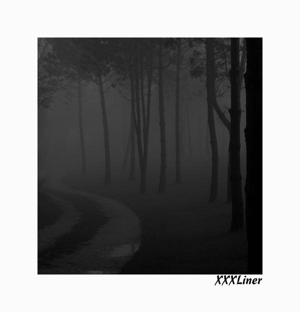 ...als der Nebel durchzog