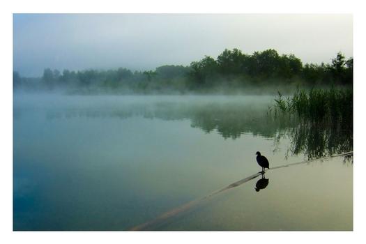 Ein Morgen am See (2)