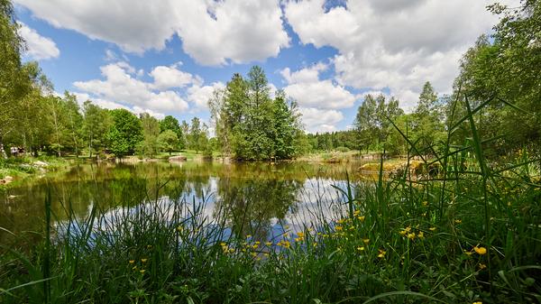 Teich im Naturpark Blockheide