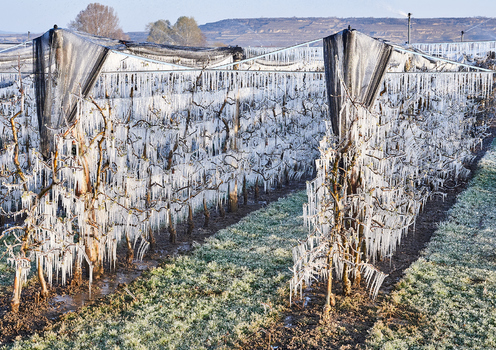 Frost Obstplantage