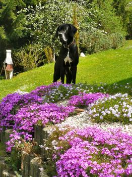 Blumenmeer mit Bewunderer ;-)