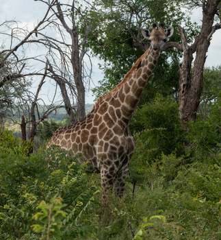 Kruger Nationalpark