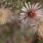 Herbst Blumen 1