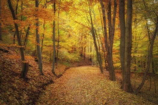 Der Wienerwald im Herbstkleid
