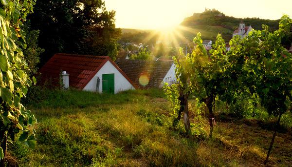 Weinviertler Sommer 19.04