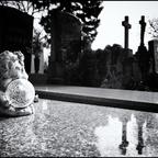 AmZentralfriedhof #8