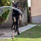 Ciko liebt Wasser
