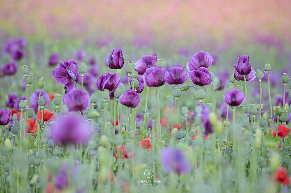 Farbtupfer in der Landschaft