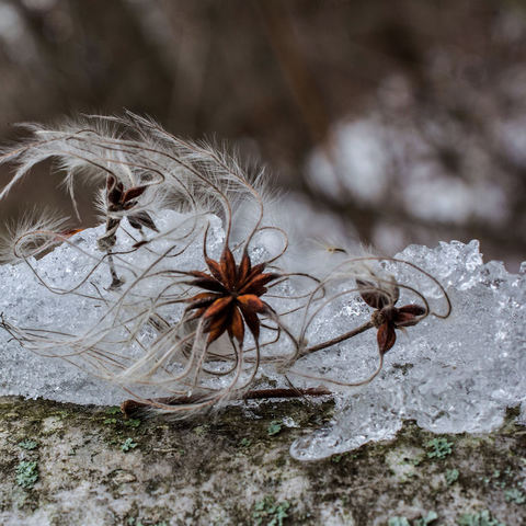 ...gefangen im Eis