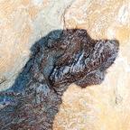 Doggenkopf auf Granit