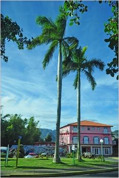 Kuba, Königspalmen
