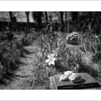 FriedhofDerNamenlosen(12)