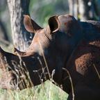 Afrika #7 Rhinoportrait