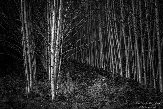 Finsterer Wald