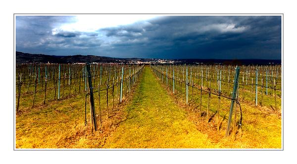 Weingarten extrem