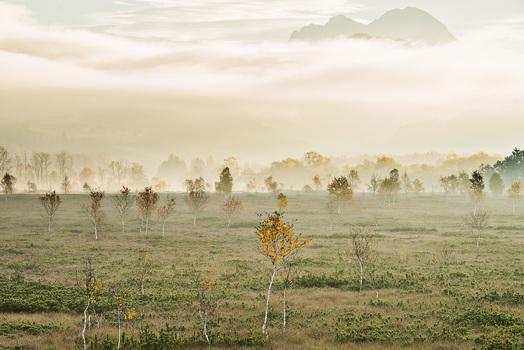 Nebliger Morgen im Pürgschachener Moor