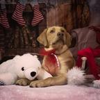 Buddy der Weihnachtshund