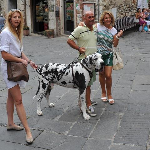 Die geliehene Dogge :-)