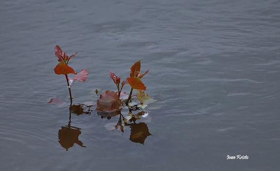 Schwimmen im Herbst