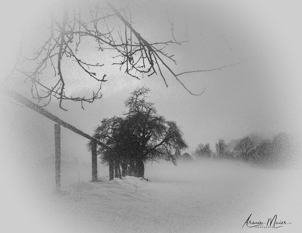Dark, Hazy Woodland -Stanz Session-