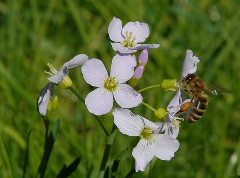 Fleißige Biene 1