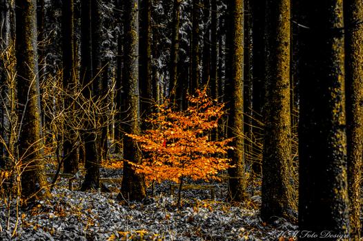 Wald Zauber