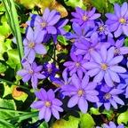 Frühling - ENDLICH... ;-)  (2)