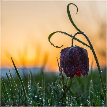 Frühlingsboten -2-