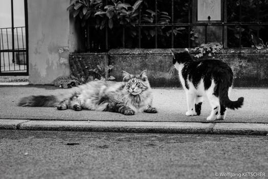 Straßenkatzen