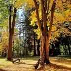 Herbst im Kurpark Bad Hall