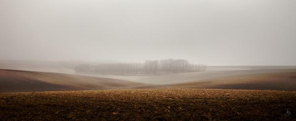 Mysty Fog