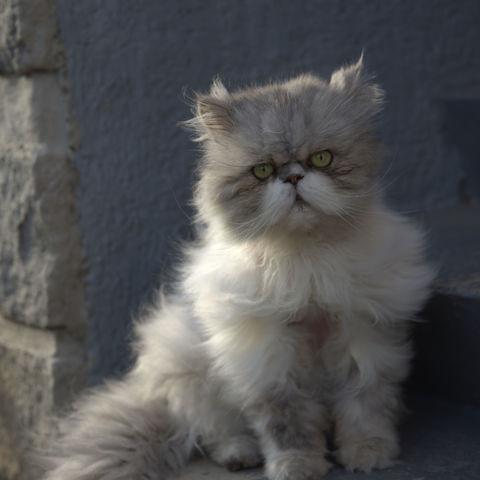Oma's grumpy cat