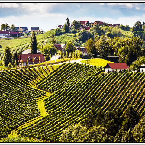 an der südsteirischen Weinstraße