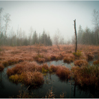 November Silence