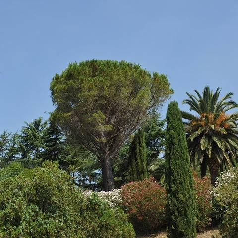 Toskanische Flora