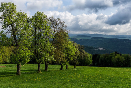 Frühling über der Donau