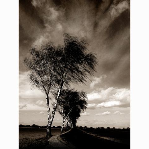...an den Bäumen vorbei...
