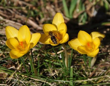 Jetzt ist der Frühling wirklich da!