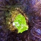 Baumhöhle
