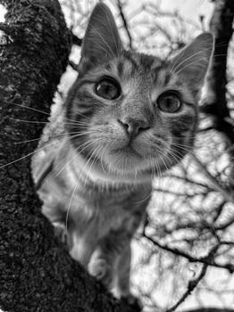 wildcats I