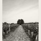 Inmitten im Weinland