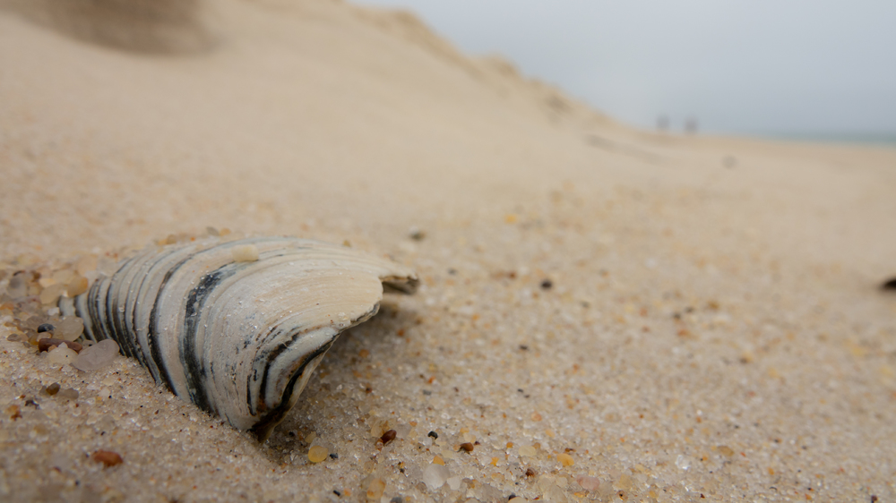 Beach Long Island