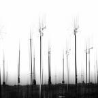 Moving Harmonic Fields - La Strada 2012