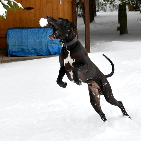 Fang den Schneeball :-)